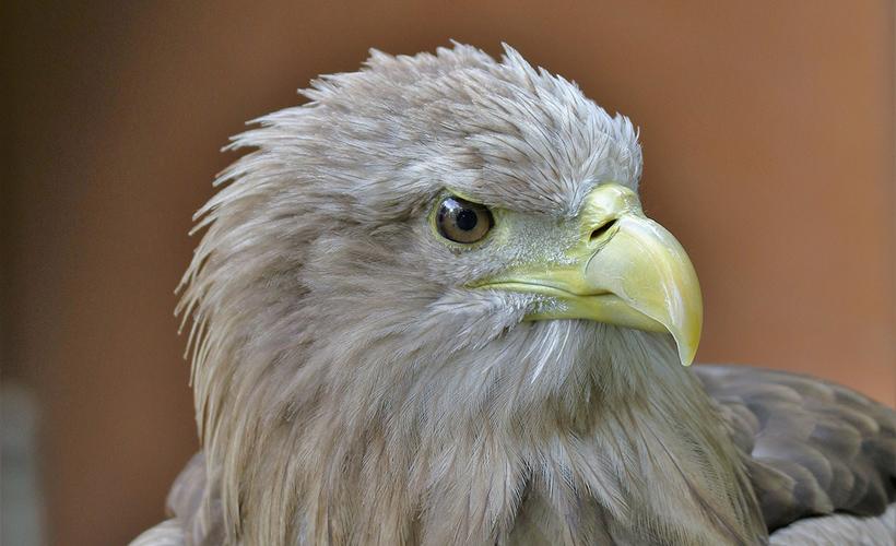 craignure bunkhouse mull white tailed sea eagle